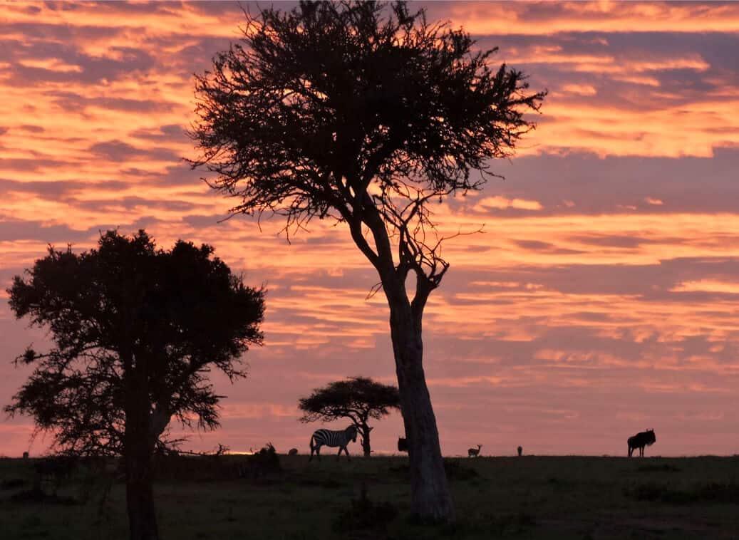 sunrise Masai Mara