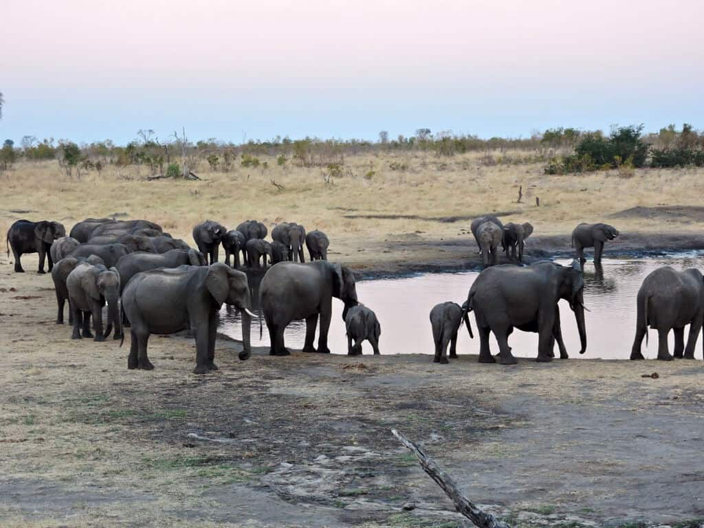 Botswana and Zimbabwe, Hwange elephants