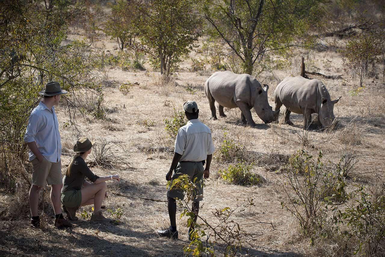 rhino tracking Zambia