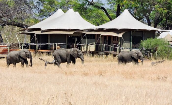 elephants and camp Hwange, Zimbabwe
