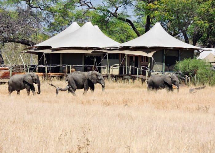 elephants and camp Hwange, Zimbabwe
