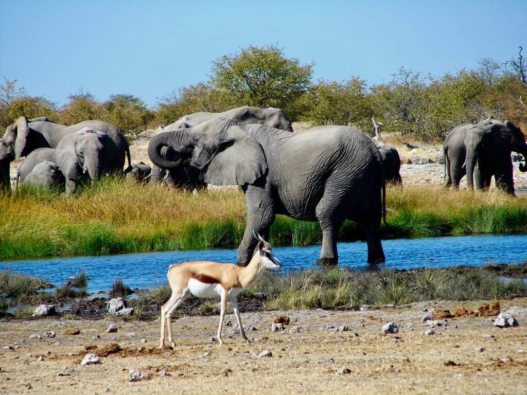 waterhole Etosha Namibia