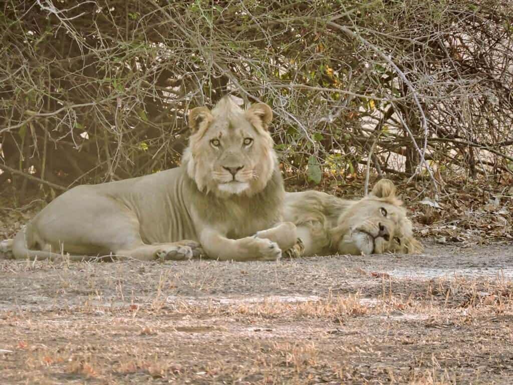 lions Lake Kariba
