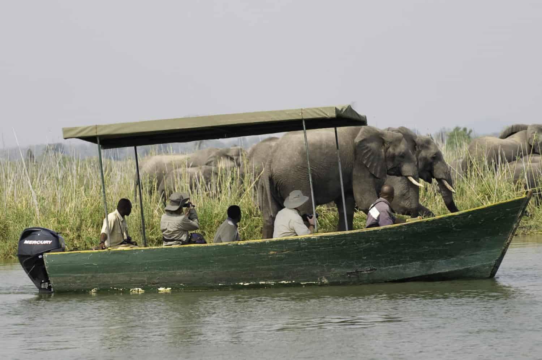 Mvuu boat with elephants Liwonde Malawi