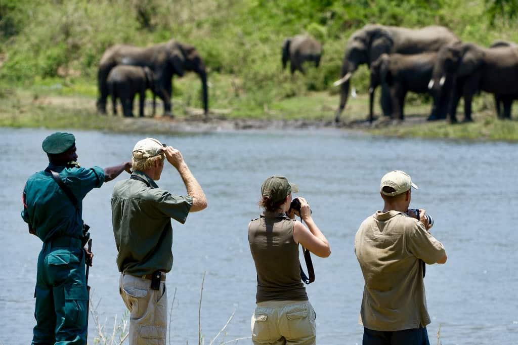 Majete elephants Malawi